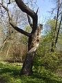 Дворцовый парк Гатчины-Palace Park in Gatchina - panoramio (2).jpg