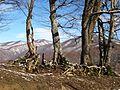 Дубки. Зима в предгорье Сочи.jpg