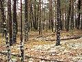 Если растёт лишайник — лес достаточно чистый - panoramio.jpg