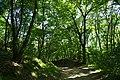 Затінок у лісі.jpg