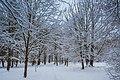 Зима в парку. 2018рік.jpg
