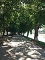 Липова алея в Ужгороді.jpg