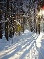 Лыжня - panoramio - Mike Redshift.jpg