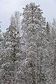 На трассе между Зеленцом и Коччойягом - panoramio (2).jpg
