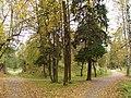 Осень в Дворцовом парке Гатчины. У Амфитеатра - panoramio.jpg