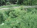 Парк шума Гази Баба во мај (79).JPG