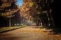 Ранок в парку ім.Чекмана. осінь 2017.jpg