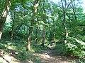 Украина, Киев - Голосеевский лес 04.jpg
