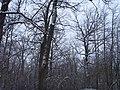 Чернечий Ліс 14.jpg