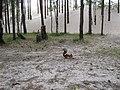 Ягры, белка - panoramio.jpg