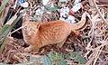 قطة في مصر 57.jpg