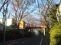 さくら坂(4月) - panoramio.jpg