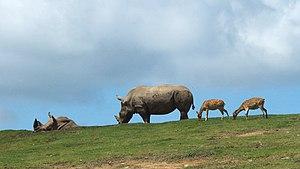 九州自然動物公園アフリカンサファリ1.jpg
