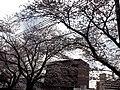 天神川高辻 - panoramio (7).jpg