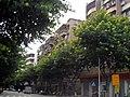 广东省江门市S271公路景色 - panoramio (3).jpg