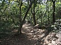 斗门登山古道 - Doumen Mountain Path - 2015.01 - panoramio.jpg