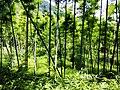 新丰科罗村-东源万绿源林场越野穿越20140628 - panoramio.jpg