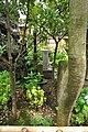 新吉原花園池(弁天池)跡 - panoramio (7).jpg