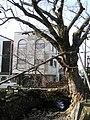 木の根橋兵庫県天然記念物。兵庫県丹波市柏原町P1101102.jpg