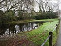 -2021-01-23 Bluebell Pond, Bacton Road, North Walsham.jpg