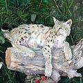 02014. Die Tiere von Waldkarpaten-004.JPG