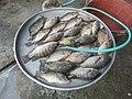 06555jfCandaba, Pampanga Market Fishes Foods Landmarksfvf 03.jpg