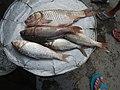 06555jfCandaba, Pampanga Market Fishes Foods Landmarksfvf 09.jpg