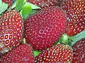 1-strawberry.jpg