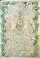 13th century anatomical illustration.jpg