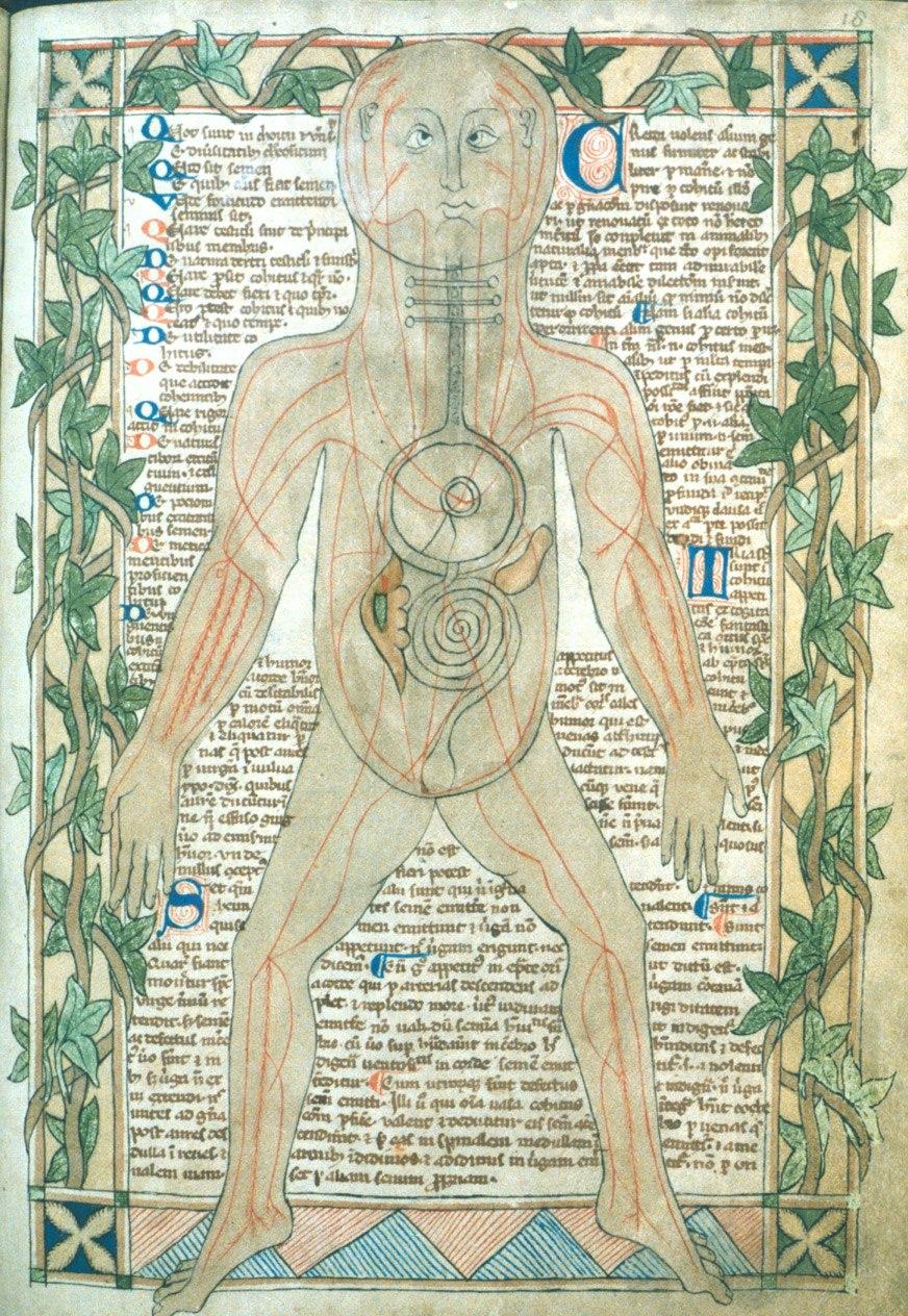 13th century anatomical illustration