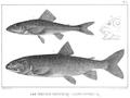 1850 LakeSuperior bySonrel 1.png