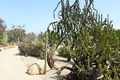 1935 (Old) Cactus Garden 6.JPG