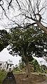 1 Chome Midori, Abiko-shi, Chiba-ken 270-1153, Japan - panoramio (8).jpg