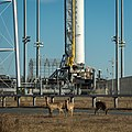 20140106 White-tailed deer graze near the Antares CRS Orb-1 rocket (201401080003HQ).jpg