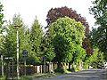 20140503 xl Stadtansichten-Strausberg-Landhausstrasse-im-Mai-6461.JPG