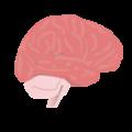 201405 cerebrum.png