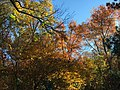 2016-11-05 10 14 02 Trees displaying autumn foliage along the West Branch Shabakunk Creek in Ewing, Mercer County, New Jersey.jpg
