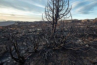 2016 Tasmanian bushfire MG 6798.jpg