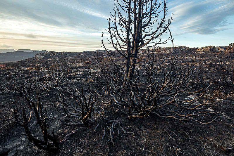 Fichier:2016 Tasmanian bushfire MG 6798.jpg