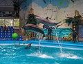 2017-05-16 Show in Kyiv Dolphinarium 05.jpg