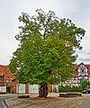 2020-08-09 ND Winterlinde in Nordshausen, Hessen 02.jpg