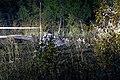 2020 Chuhuiv An-26 crash 06.jpg