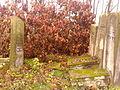 21 listopada 2013 - cmentarz żydowski kon XVII Szydłowiec - 2.jpg