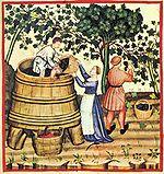 Image montrant les vendanges au XIVe siècle. (taccuino sanitatis)
