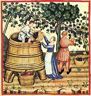 Anjou wine - Angevin winemakers in the Middle Ages were one of the few Medieval producers to blend both the vin de goutte (free run juice) with the vin de presse (pressed wine) which added tannins and color to the wine.