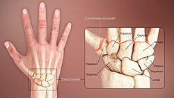 3D Medical Animation Human Wrist.jpg