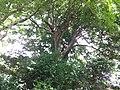 4 Chome-41 Jindaiji Minamimachi, Chōfu-shi, Tōkyō-to 182-0013, Japan - panoramio (3).jpg