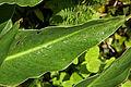 Açores 2010-07-20 (5075495457).jpg