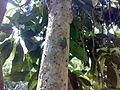 A Grig in the tree.jpg