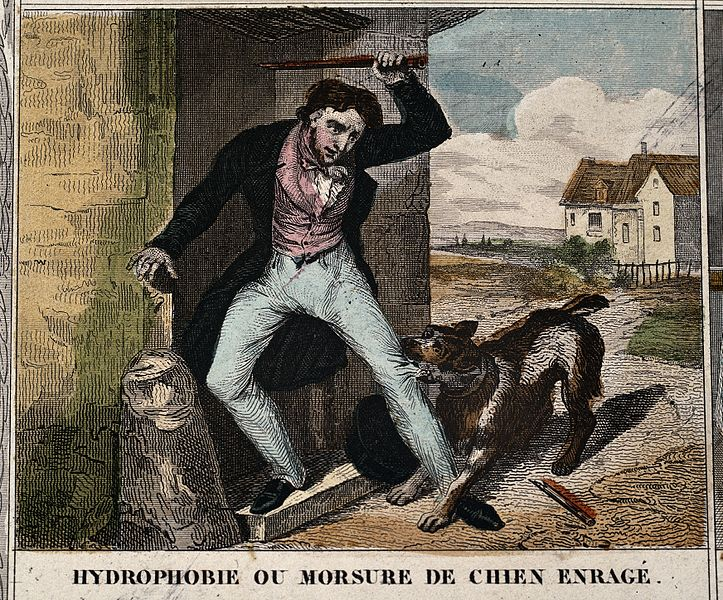 File:A man trying to fend off a rabid dog Wellcome V0010548.jpg